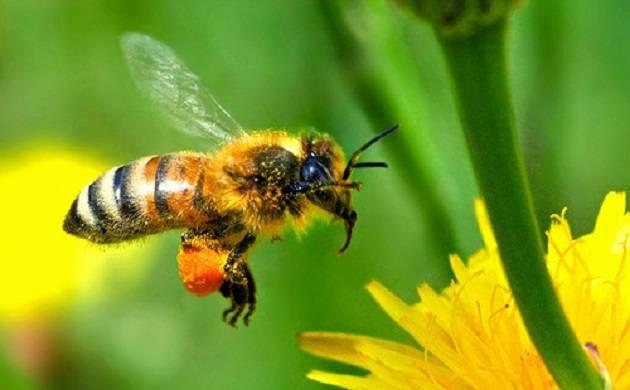 927664576-honeybee_6.jpg